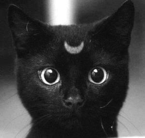 El gato negro es considerado desde el inicio de los tiempos como un animal mágico.